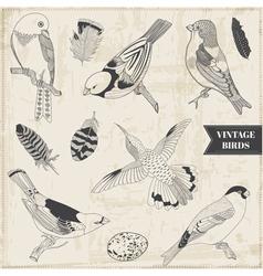 Set calligraphic hand drawn birds vector