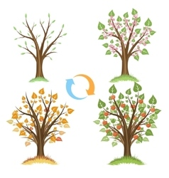 Apple tree seasonal cycle vector