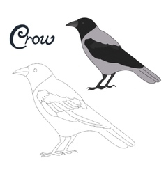 Educational game connect dots to draw crow bird vector