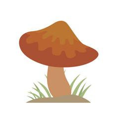 Poisonous brown mushroom nature food vegetarian vector