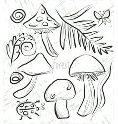 Coloring page with mushrooms and forest flora vector