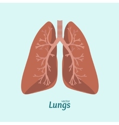 Human lung anatomy card vector