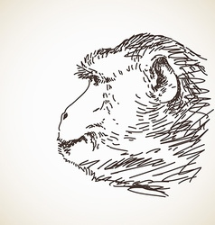 Sketch of monkey head vector