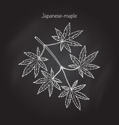 Japanese-maple tree branch vector