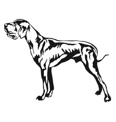 decorative standing portrait of great dane vector image vector image