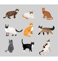 Set of cute cartoon kitties or cats vector