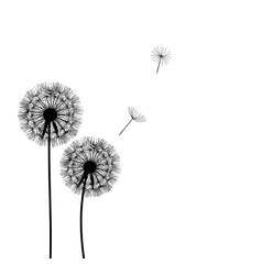 Abstract dandelion background vector