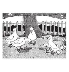 Ugly duckling vintage vector