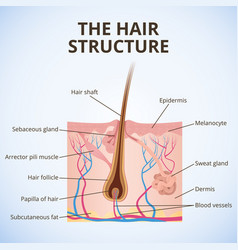 The structure of the hair vector