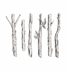 tree branches set hand drawing vector image