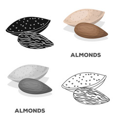 Almondsdifferent kinds of nuts single icon in vector