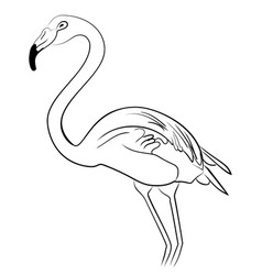 flamingo bird black white sketch vector image