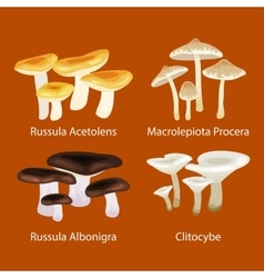 Isolated edible natural mushrooms in nature vector