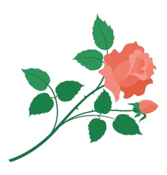 Rose flower isolated vector