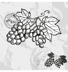 Hand drawn decorative grapes vector