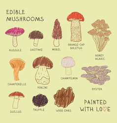 Set drawings of edible mushrooms for your design vector