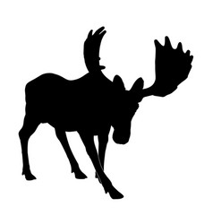 Silhouette adult moose vector