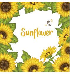 Sunflower sunflower card design vector