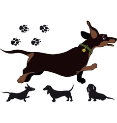 Run dachshund vector