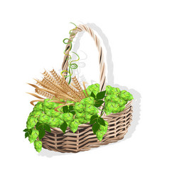 Wicker basket with hops and malt vector
