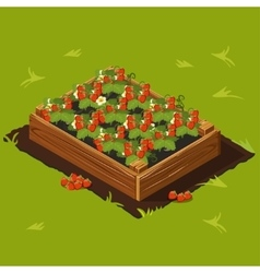 Berries Garden Wooden Box with Strawberry Set 14 vector image
