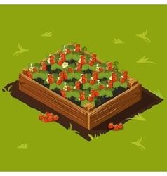 Berries garden wooden box with strawberry set 14 vector