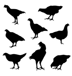 chicken2 vector image
