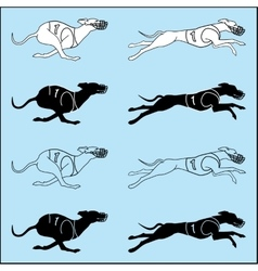 Set of silhouettes running dog whippet breed vector
