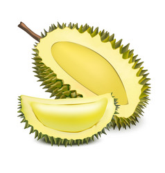 Realistic 3d detailed fruit durian vector