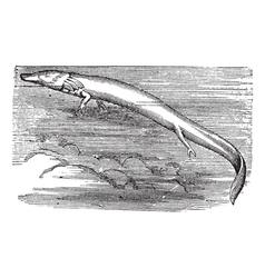 Vintage Olm Sketch vector image