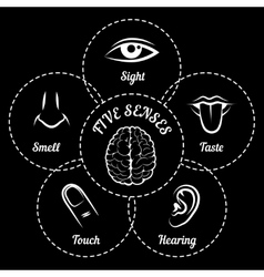 Five senses scheme vector image