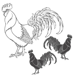 Rooster or cock hand drawn sketch isolated vector