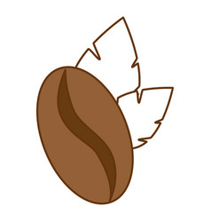 coffee seed with leafs vector image vector image