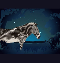 Zebra in the forest at night vector
