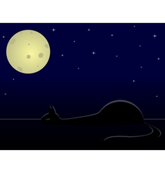 Cat sleep under night sky vector