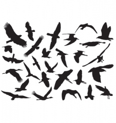 flying birds vector image vector image