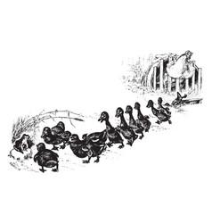 Ducklings vintage vector