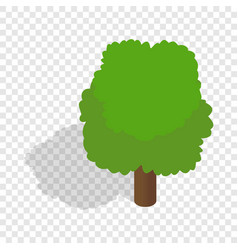 fluffy tree isometric icon vector image