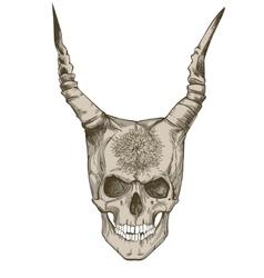 devils skull with horns vector image