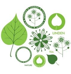 Linden vector image vector image