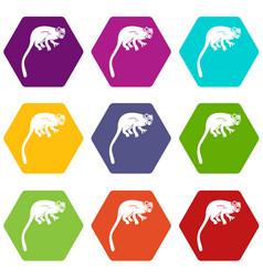 Marmoset monkey icon set color hexahedron vector