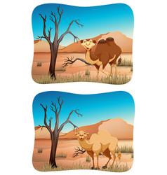 Two scenes of camel in desert vector