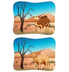 Two scenes of camel in desert vector