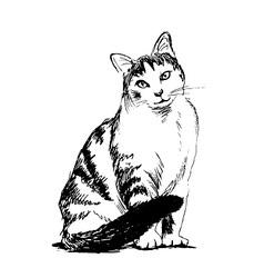 Hand sketch sitting cat vector
