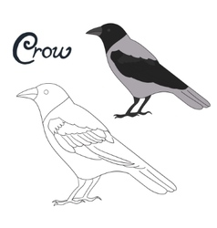 Educational game coloring book crow bird vector