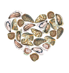 heart with watercolor oysters on white background vector image vector image