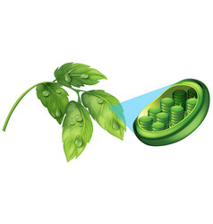 Green leaves and cell plant diagram vector