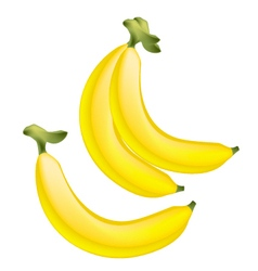 Fresh ripe golden banana on white background vector