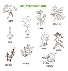 Circulatory stimulant herbs vector