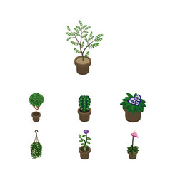 Isometric plant set of fern blossom flowerpot vector